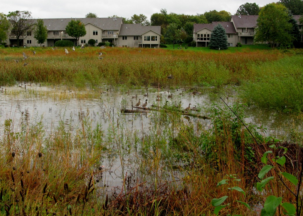 Photos heavy rains fill the pond valley pond townhome for Filling in a pond